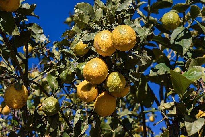 lemon-1947741__480